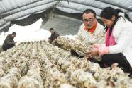"""河南正阳:构建""""1+1""""农业产业扶贫模式"""