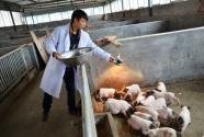 湖南衡南:因地制宜 玫瑰养猪提升乡村经济