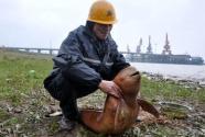 """频繁违规调整为项目开发让路 安庆江豚保护区为何不断""""瘦身"""""""
