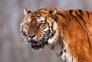 东北虎豹国家公园首次集中开展大规模清山清套行动