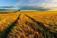 农地制度改革进入深化施工期