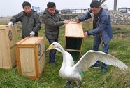 16只珍稀候鸟放飞鄱阳湖