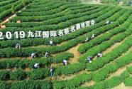 茶汇九江 泉约世界