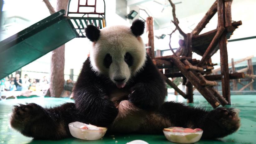 """上海:动物园里的""""清凉夏日"""""""