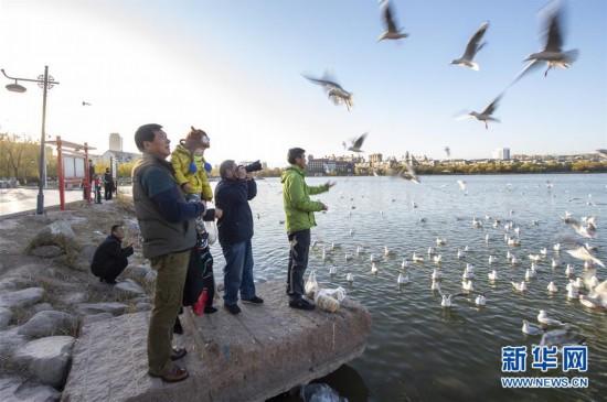 (環境)(2)寧夏銀川:鷗影翩翩