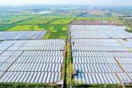 武漢市江夏區金口街:由生產型農業向生態旅游型轉變