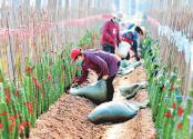 安徽安慶:火龍果 富農家
