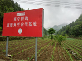 发展数字农业 推进产业富农——助力乡村振兴的电商路径
