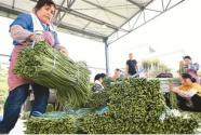 柳州:智慧農業促豐收