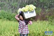 广西柳州下陶村:一朵花闯出的致富路